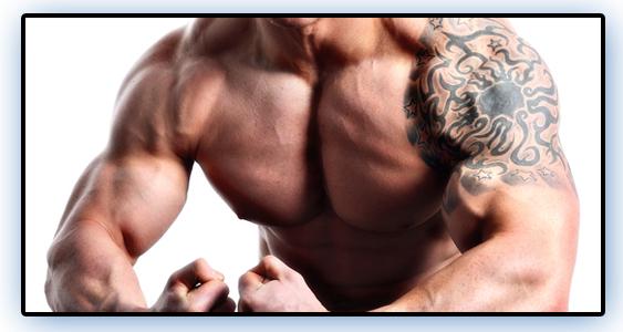 musclemass3