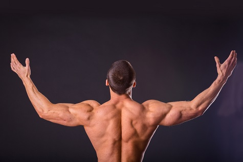 backmuscle-article